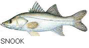 picture of fatsnook